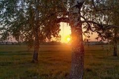 O nascer do sol acima dos sub?rbios e retrata a ?rvore de vidoeiros das silhuetas Trajeto e vidoeiros fotos de stock