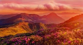O nascer do sol colorido surpreendente nas montanhas com nuvens coloridas e rododendro cor-de-rosa floresce no primeiro plano Sag imagens de stock royalty free