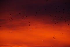 O nascer do sol dramático na cidade 1 Foto de Stock