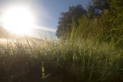 O nascer do sol na névoa no lago brilha o orvalho Foto de Stock Royalty Free