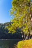 O nascer do sol na pungência-ung, pinho Forest Park para relaxa em Tailândia imagem de stock