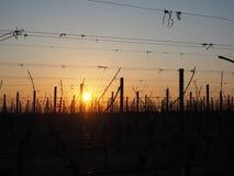 O nascer do sol no inverno nos montes dos vinhedos aproxima o lago Garda fotos de stock royalty free