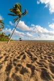 O nascer do sol sobre a palma em Olas de Las encalha, Fort Lauderdale, Florida, Estados Unidos da América imagens de stock royalty free