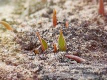 O nascimento de uma vida nova na primavera imagem de stock royalty free
