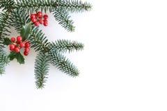 O Natal denominou a composição, quadro decorativo, bandeira Folhas do verde da árvore de azevinho, bagas vermelhas, ramos e abeto fotografia de stock