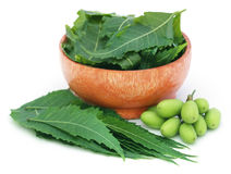 O neem medicinal frutifica com folhas em uma bacia foto de stock