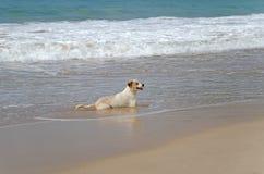 Żołnierza piechoty morskiej pies Fotografia Stock