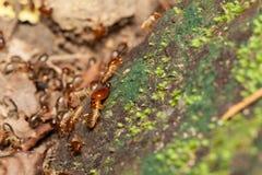 Żołnierza termit chroni pracowników termity Zdjęcie Royalty Free
