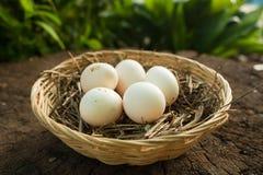 O ninho com ovos fotos de stock