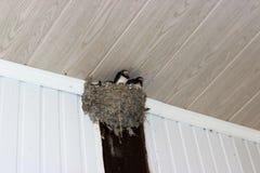 O ninho da andorinha, torcido sob um telhado de uma varanda imagens de stock