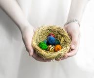 O ninho da mola da palha enchido com os ovos coloridos na fêmea cede o fundo branco Imagem de Stock Royalty Free