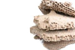 O ninho da vespa Fotos de Stock