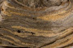 O ninho das vespas fotos de stock