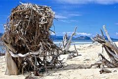 O ninho de Eagle enorme em uma praia celestial fotos de stock royalty free