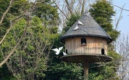 O ninho do pássaro Imagens de Stock