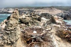 O ninho do pássaro com os ovos na praia rochosa fotos de stock