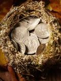O ninho do pássaro encheu-se com as folhas americanas da moeda e de outono Fotos de Stock
