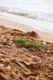 O ninho do pássaro na areia pelo mar fotografia de stock royalty free