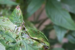 O ninho do ` s da formiga que fez da folha, alguma formiga está trabalhando para a unidade, paciente, trabalhos de equipa, concei fotografia de stock