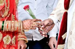 O noivo dá a flor de Rosa vermelha fotografia de stock royalty free