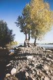 O noivo e a noiva no banco de rio Foto de Stock Royalty Free
