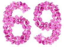 O numeral árabe 69, sessenta e nove, das flores da viola, isolou o Fotografia de Stock Royalty Free