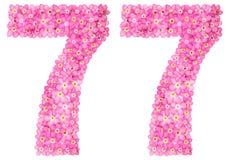 O numeral árabe 77, setenta sete, miosótis cor-de-rosa floresce, é Fotografia de Stock Royalty Free