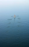 O oarsman Imagem de Stock