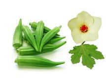 O Okra frutifica folha e flor fotografia de stock