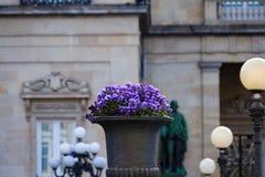 O oleiro com amor perfeito roxo floresce o wittrockiana da viola x com um fundo de pedra defocused da fachada Fotos de Stock Royalty Free