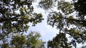 O olhar das partes superiores das árvores abaixo filme