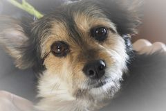 O olhar de um cão Fotos de Stock Royalty Free