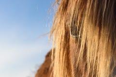 O olhar de um cavalo Fotografia de Stock Royalty Free