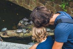 O olhar do pai e do filho em tartarugas da água nada na lagoa de Hong Ko imagem de stock royalty free