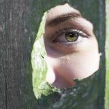 O olho verde da menina no knothole musgoso Fotografia de Stock