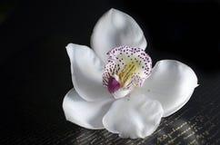 O orchidea bonito com fundo Imagem de Stock Royalty Free