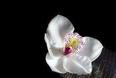 O orchidea bonito com fundo Fotografia de Stock Royalty Free