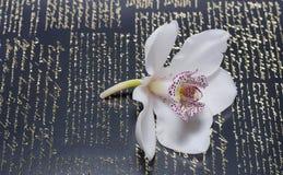 O orchidea bonito com fundo Fotos de Stock Royalty Free