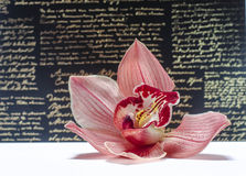 O orchidea bonito com fundo Imagens de Stock