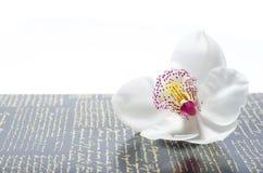 O orchidea bonito com fundo Fotografia de Stock