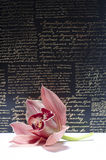 O orchidea bonito com fundo Foto de Stock Royalty Free