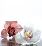 O orchidea bonito com fundo Imagem de Stock