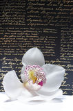 O orchidea bonito com fundo Imagens de Stock Royalty Free