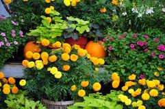O orgulho do jardineiro Imagem de Stock Royalty Free