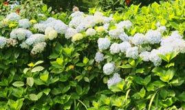 O Ornamental floresce inativamente no parque de bryant imagem de stock royalty free