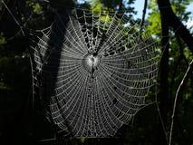 O orvalho cobriu a Web de aranhas Fotos de Stock Royalty Free