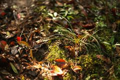 O orvalho e as folhas estão no assoalho do ther fotos de stock royalty free