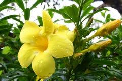 O orvalho em flores Imagens de Stock