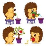 O ouriço cresce a árvore com maçã Fotografia de Stock Royalty Free