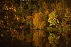 O ouro do parque do outono é refletido na lagoa Foto de Stock